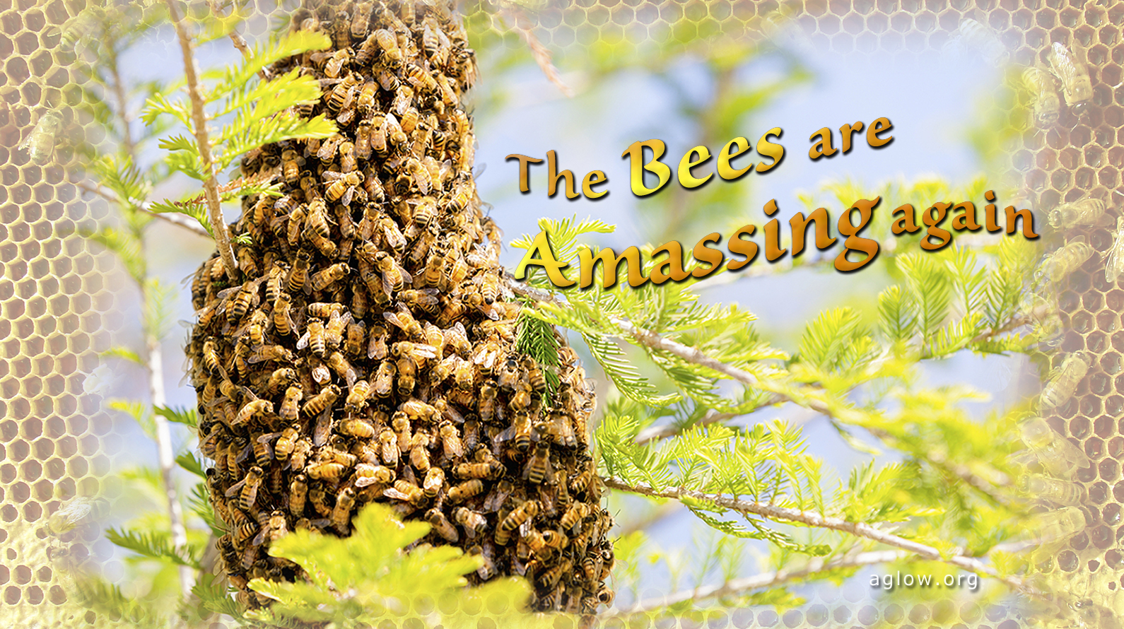 The Bees Are Amassing Again-1590x890