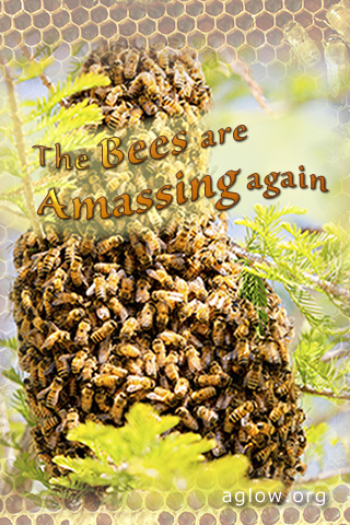 bees-amassing 320x480